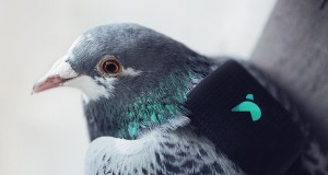 Pigeons carry IoT sensors to track air pollution in London