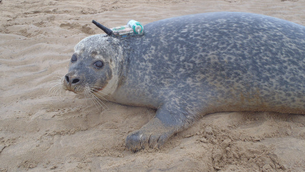 Scottish wildlife experts save seals with IoT