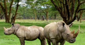 IoT, drones could save rhinos from poaching in South Africa