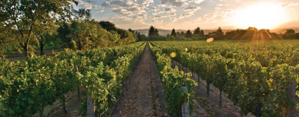 Verizon teams with ITK to bring IoT to three California vineyards