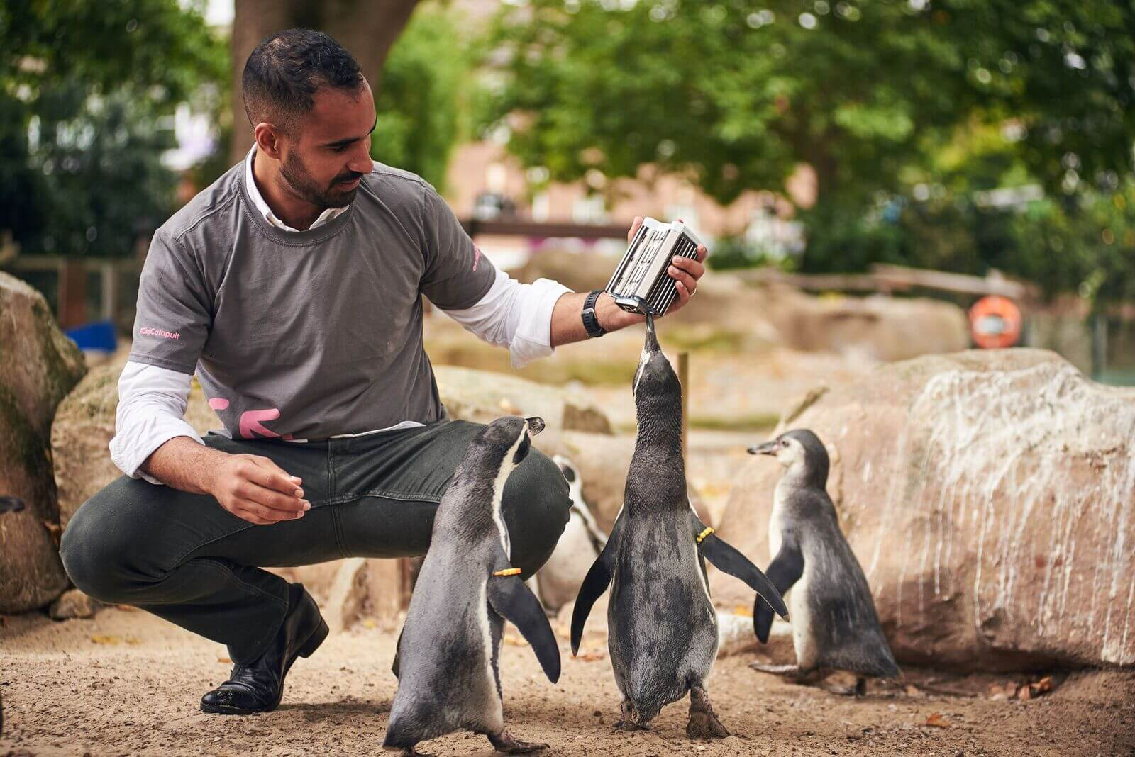 London Zoo penguins brush up on their IoT skills