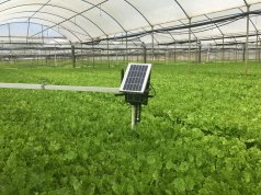 Italian start-up Evja launches smart agriculture platform for salad growers