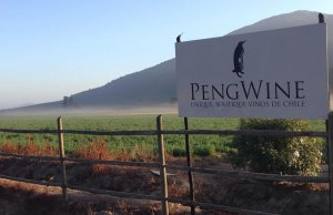 Chilean winery PengWine adds IoT marketing to the blend
