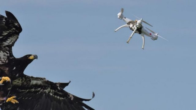 dutch police retire drone-catching eagles