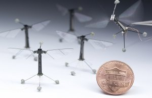 cornell university insect robots, robobee