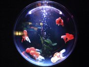 casino fish tank iot security breach