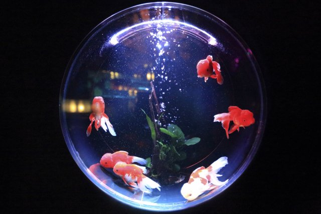 hackers steal casino s customer data via connected fish tank
